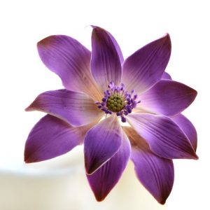 Nicoles Zuckerwerk Feinzucker Blüte Tranquil Water Purple