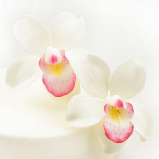 Nicoles Zuckerwerk Feinzucker Blüten Cymbidium Orchid 2er